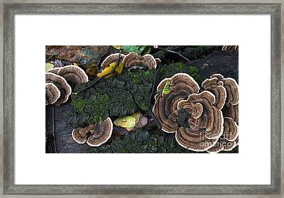 Fungi Contrast Framed Print