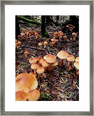 Fungi Forest Framed Print by Steven Valkenberg