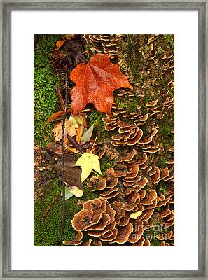 Framed Print featuring the photograph Fungi by Jim McCain