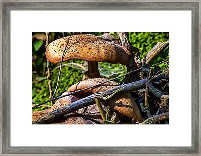 Fungi - Mushroom In Sunlight Having A Yellow/orange Colour Framed Print by Leif Sohlman