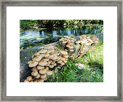Fungi On A Fallen Tree Branch Framed Print by Ashley Cooper