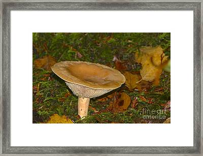 Fungus Among The Leaves Framed Print by Sharon Talson