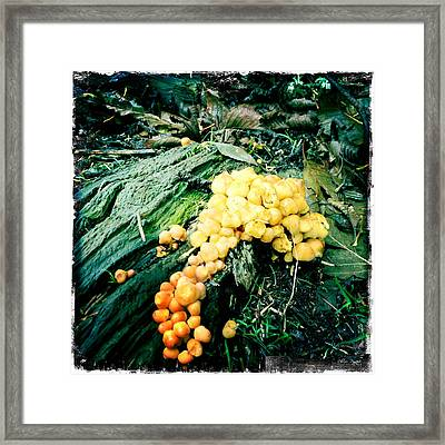 Fungus Among Us Framed Print