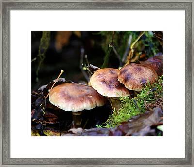 Fungus Among Us II Framed Print by Jeanette C Landstrom