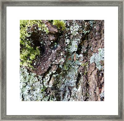 Framed Print featuring the photograph Fungus Bark by Laurie Tsemak