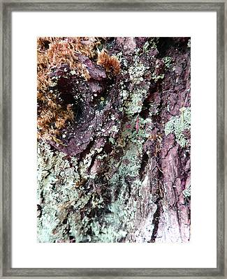Framed Print featuring the photograph Fungus Bark Purple by Laurie Tsemak