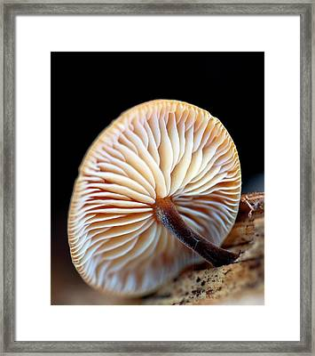Fungus Growing From Sawn Timber Framed Print by Ian Gowland
