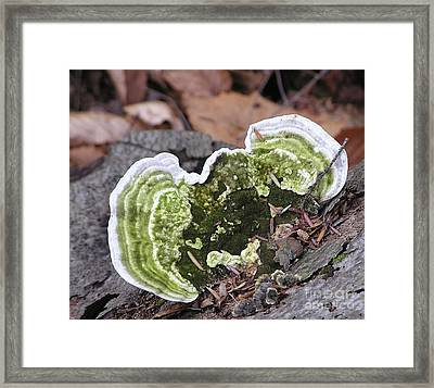 Fungus Number One Framed Print