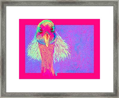 Funky Demoiselle Crane Bird Hair-do Art Prints Framed Print by Sue Jacobi
