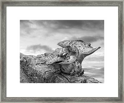 Funky Fungi Black And White Framed Print by Gill Billington