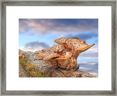 Funky Fungi Framed Print by Gill Billington