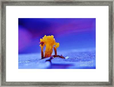 Funky Fungi Framed Print