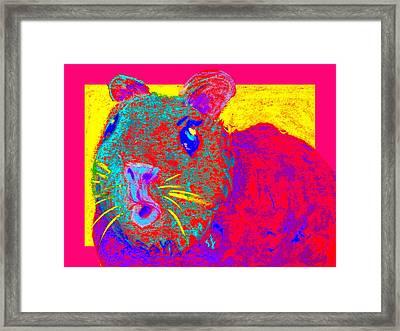 Funky Guinea Pig Framed Print