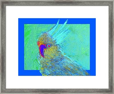 Funky Sulphur Crested Cockatoo Bird Art Prints Framed Print by Sue Jacobi