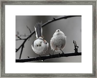 Funny Couple Framed Print