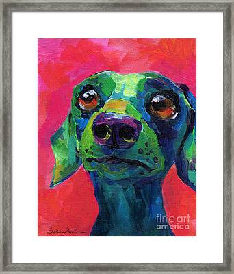 Funny Dachshund Weiner Dog Framed Print by Svetlana Novikova