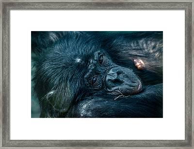 Stare Framed Print by Brian Stevens