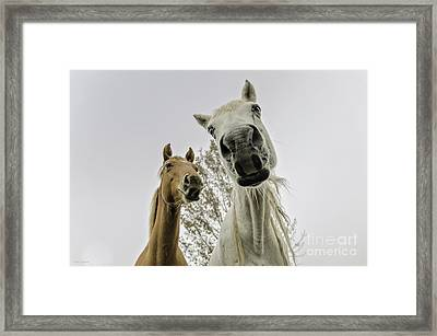 Funny Horses Framed Print by Cindy Bryant