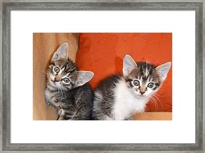 Funny Kittens Framed Print