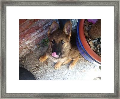 Funny  Framed Print by MariaGloria Sellitto