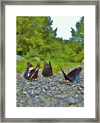 Funny Meeting You Here Framed Print