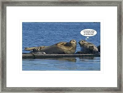 Funny Seals Framed Print