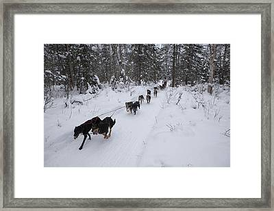 Fur Rondy Races Framed Print by Tim Grams