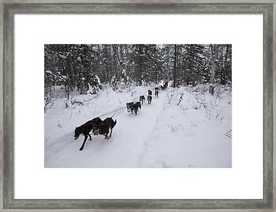 Fur Rondy Races Framed Print by Tim Grams