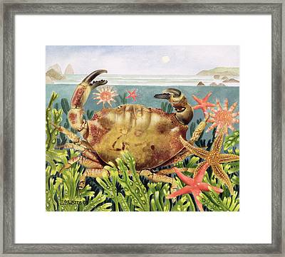 Furrowed Crab With Starfish Underwater Framed Print by EB Watts