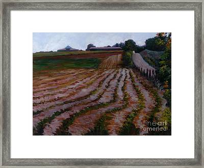 Furrowed Field Framed Print
