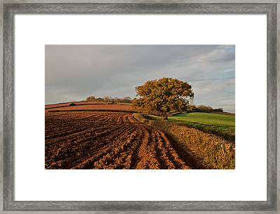 Furrows And Field Framed Print by Pete Hemington