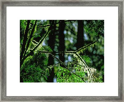 Furry Branches Framed Print by Kim Lessel