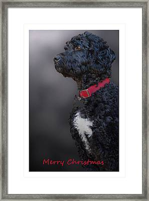 Furry Christmas Framed Print by Cindy Rubin