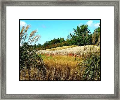 Furry Hill Framed Print by Tim Fillingim