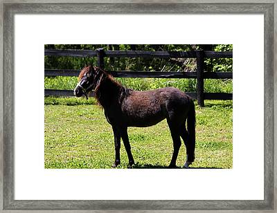 Furry Pony Framed Print
