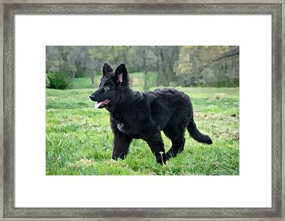 Furry Puppy Framed Print by Sandy Keeton