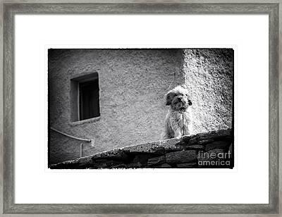 Fury Friend At Delos Framed Print