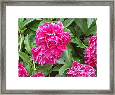 Pretty In Pink Framed Print by Katie Spicuzza