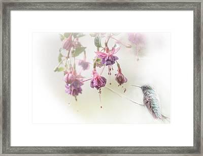 Fuschia Dreams Framed Print