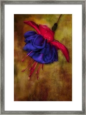 Fuschia Flower Framed Print by Susan Candelario