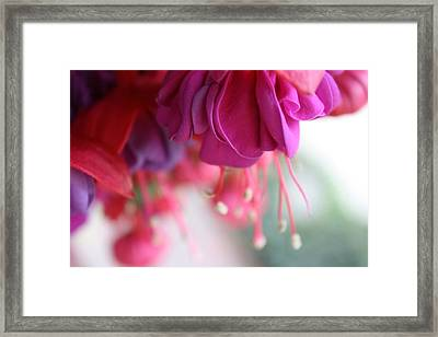 Fuschia Framed Print by Maria Schaefers