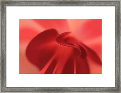 Fuscia Framed Print by Rebeka Dove