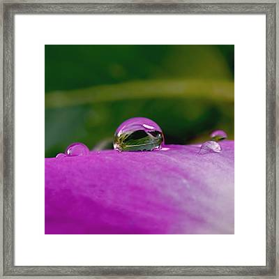 Fusion Framed Print by Rona Black