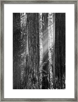 Future Giants Monochrome Framed Print by Mark Alder