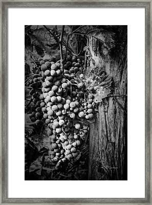 Future Wine Framed Print by Jeff Swanson