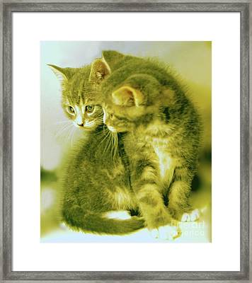 Fuzzy Brothers Framed Print