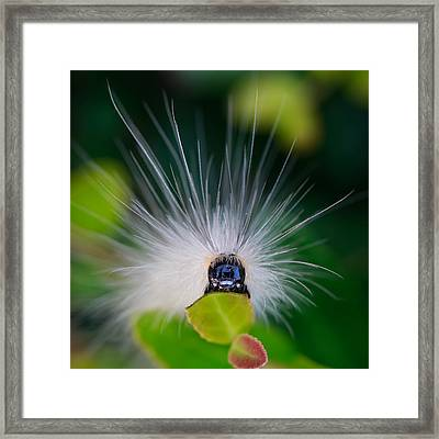 Fuzzy Caterpillar Framed Print by Steve Stephenson