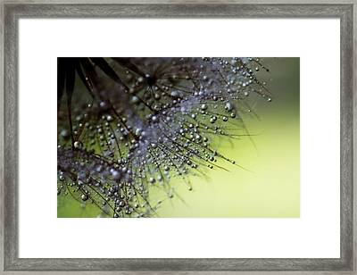 Fuzzy Drops Of Awesomeness Framed Print by Lisa Knechtel