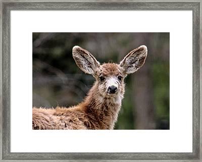 Fuzzy Fawn Framed Print