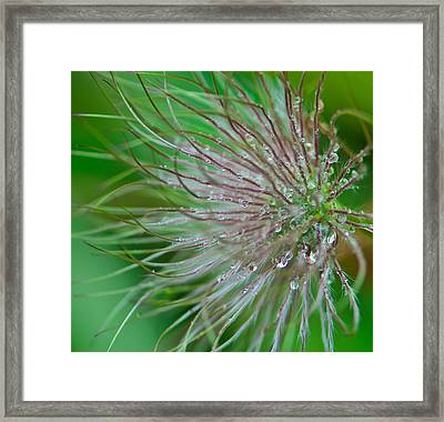 Fuzzy Flower Framed Print by Sarah Crites